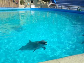 Delfin del acuario Aragón